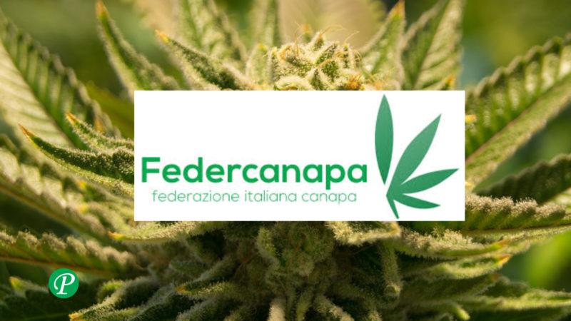 federcanapa: video