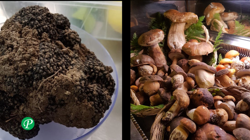 Tartufo e funghi porcini: video