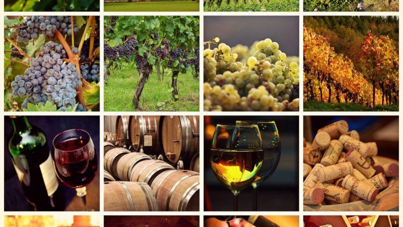 Emergenza Covid-19: il settore vitivinicolo irpino è in crisi
