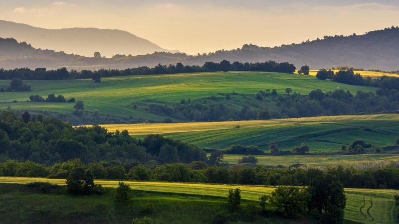 Maurizio Petracca: proposte post covid-19 alla Regione Campania