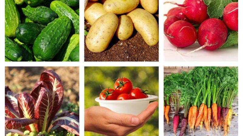 Luglio: verdure di stagione