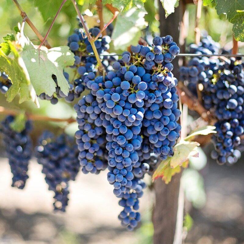 webinar sull'agroalimentare in Irpinia